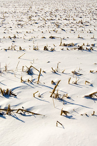 A field is covered in snow following a snowstorm in Illinois
