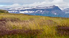 Vigur Island Landscape