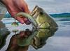 Fishing, bass fishing