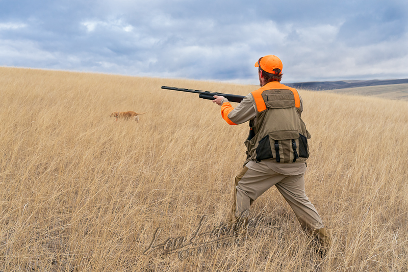 Hunting, upland bird hunting, pheasant hunting with yellow point