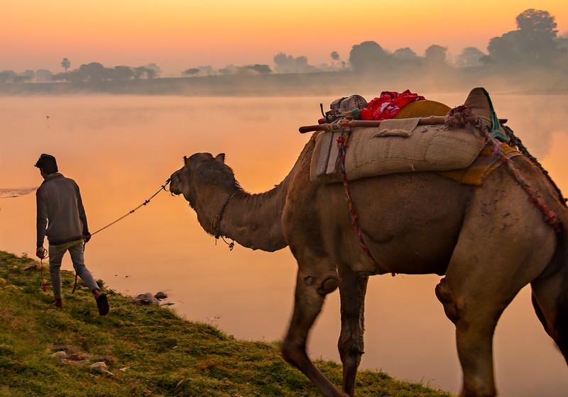 Camel Handler at Sunrise