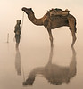Camel Handler Shrouded  in the Mist of the Yamuna River