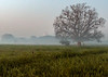 Taj Mahal in the Distance at Sunrise  - A Misty Morning