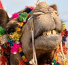 Thar Desert - Jaisalmer