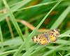 Moth on Blade