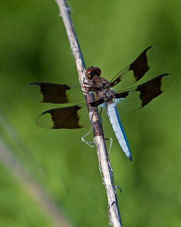 Dragonfly, Wichita Mountains National Wildlife Refuge, OK