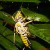 Grasshopper on the glass