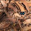 "Tagfalter ""Blue Pansy"" (Junonia oenone) auf trockenen Palmfarnblättern Encephalartos transvenosus, Modjadji Cycad Nature Reserve, Limpopo, Südafrika"