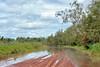 Graphium eurypylus, Pale triangle, Great Jay. Oolloo crossing, Douglas/Daly conservation area, NT, Australia – the Wet Season