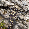 Mountain giant dragonfly (Uropetala chiltoni). Comyns Stream, Black Hill Range, Canterbury.