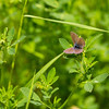 One more butterfly on the walk back from the Radium Hot Springs.  This one was only about 1 cm across.