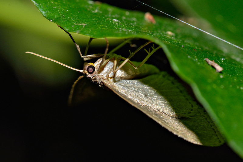 Moth. Opoho, Dunedin.