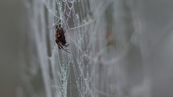 Spider 04