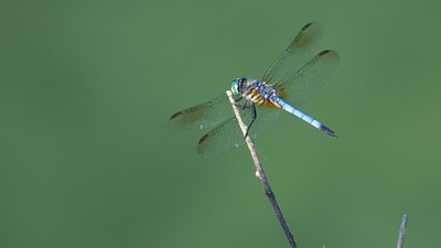 Dragon Fly 02