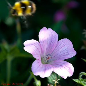 Bee - Passing Bee