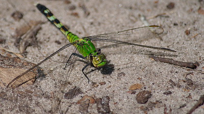Dragon Fly 01