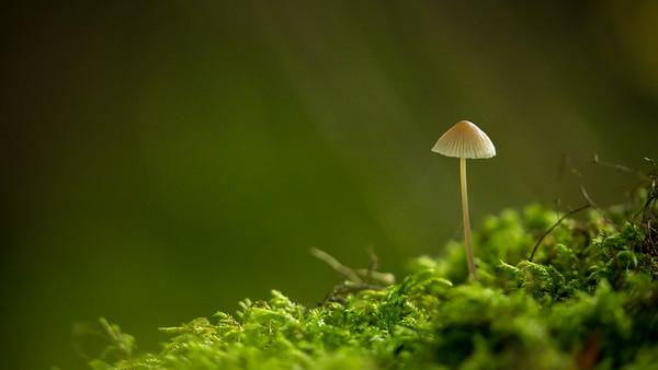 Unknown fungi species