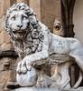 Medici Lion at the Loggia dei Lanzi in the Piazza della Signoria - Florence