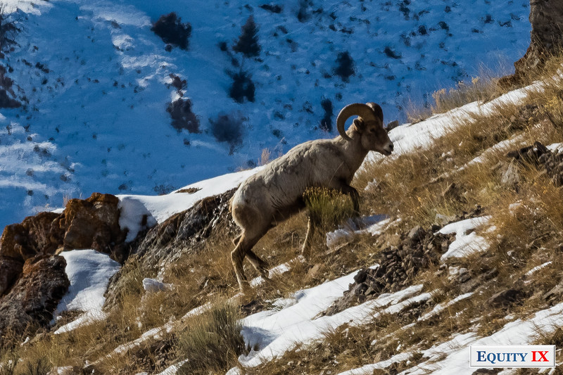 Wildlife - Grand Teton National Park