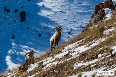 Wildlife - Grand Teton National Park