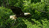 Eagle Tour - James River - June 9, 2014