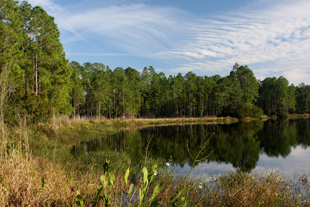 Looking southeast along the edge of a pond in Split Oak Wildlife Mitigation Park southeast of Orlando.