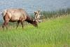 Elk, off Hwy. 16.