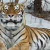2-12-10 Henry Villas Zoo, Madison, Wisconsin   <br /> Cyprus