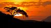 sunset, Amboseli National Park, Kenya