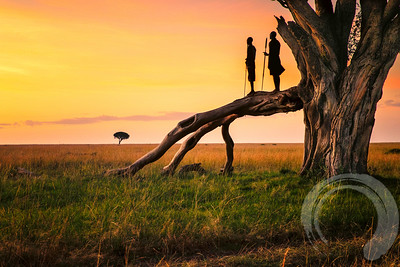 2 Masai Walk Into a Tree.....