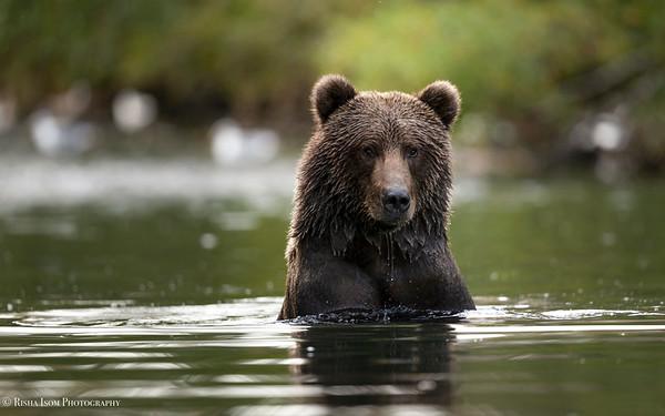 Bathing Buskin Beauty