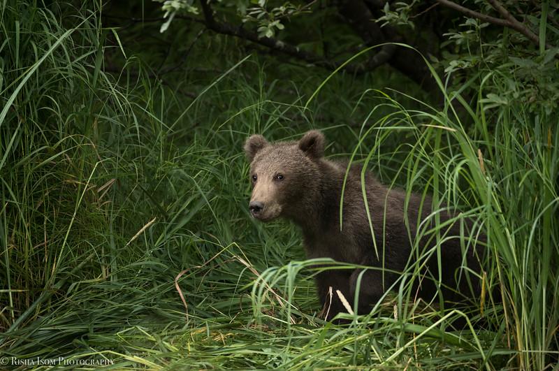Shy female cub.