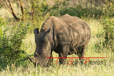 Kruger_National_Park_Holiday_Feb_2015-43