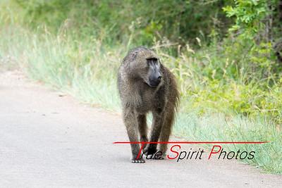 Kruger_National_Park_Holiday_Feb_2015-27