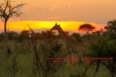 Kruger_National_Park_Holiday_Feb_2015-44