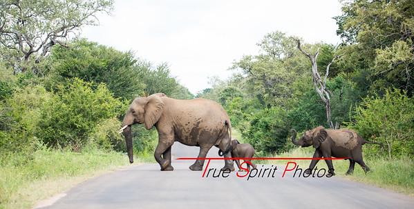Kruger_National_Park_Holiday_Feb_2015-16