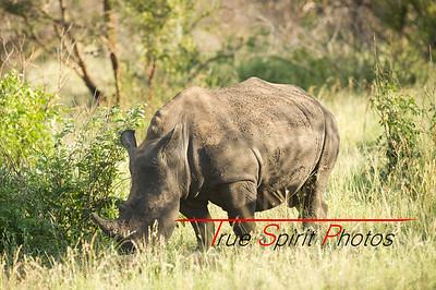 Kruger_National_Park_Holiday_Feb_2015-42