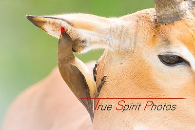 Kruger_National_Park_Holiday_Feb_2015-25