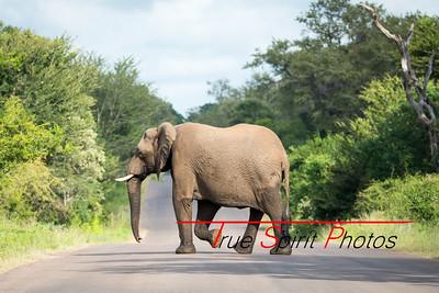 Kruger_National_Park_Holiday_Feb_2015-17
