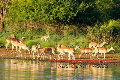 Kruger_National_Park_Holiday_Feb_2015-3