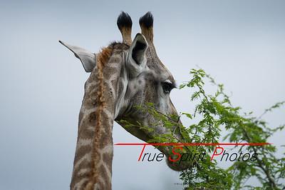 Kruger_National_Park_Holiday_Feb_2015-31