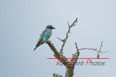 Kruger_National_Park_Holiday_Feb_2015-28