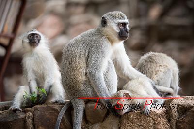 Kruger_National_Park_Holiday_Feb_2015-32