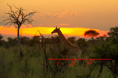 Kruger_National_Park_Holiday_Feb_2015-45