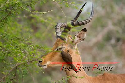 Kruger_National_Park_Holiday_Feb_2015-21