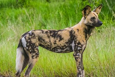 South Africa wildlife & scenic