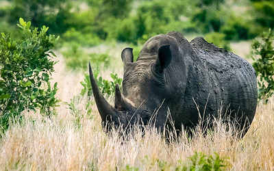 South Africa wildlife & scenic
