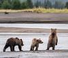 Three little cubs!