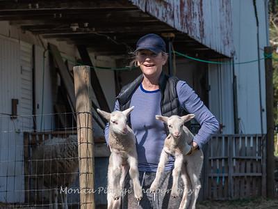 Lambs 13 April 2018-6924
