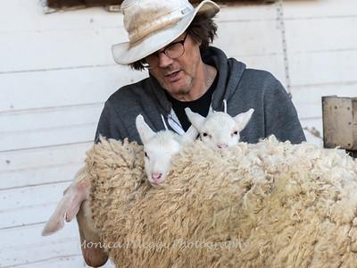 Lambs 13 April 2018-7053